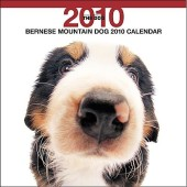 Kalender Berner Sennenhond 2010 - The Dog