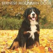 Kalender Berner Sennenhond 2011