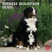 Kalender Berner Sennenhond 2012