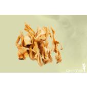 CarniVoer - Lamskophuid
