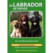 Labrador Retriever - Dogtime