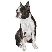 Borduurapplicatie Boston Terrier EMB002 - rechts kijkend