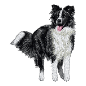 Borduurapplicatie Border Collie EMB020 - variant 1