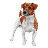 Borduurapplicatie Parson Russell Terrier EMB015 - variant 1