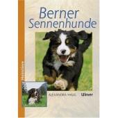 Berner Sennenhunde - Alexandra Haug