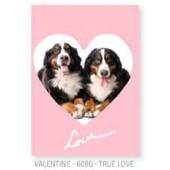 Studio Pets By Myrna - True Love - Wenskaart 12 * 16 cm