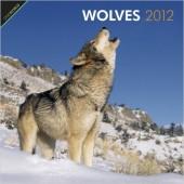 Kalender Wolves 2012