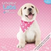 Kalender Labrador Retriever 2016 - Lovable Labs