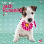 Kalender Jack Russell Terrier 2016 - Jumping Jack Russells