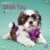 Kalender Shih Tzu 2016 - Sweet Shih Tzu