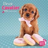 Kalender Cavalier King Charles Spaniel 2016 - Dear Cavalier
