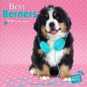 Kalender Berner Sennenhond 2016 - Best Berners