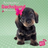 Kalender Dashond / Teckel 2016 - Adorable Dachshund