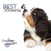 Kalender Berner Sennenhond 2012 - Best Berners
