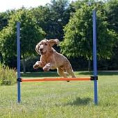 Dog Agility Hoogtesprong