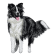 Borduurapplicatie Border Collie EMB020 - variant 2